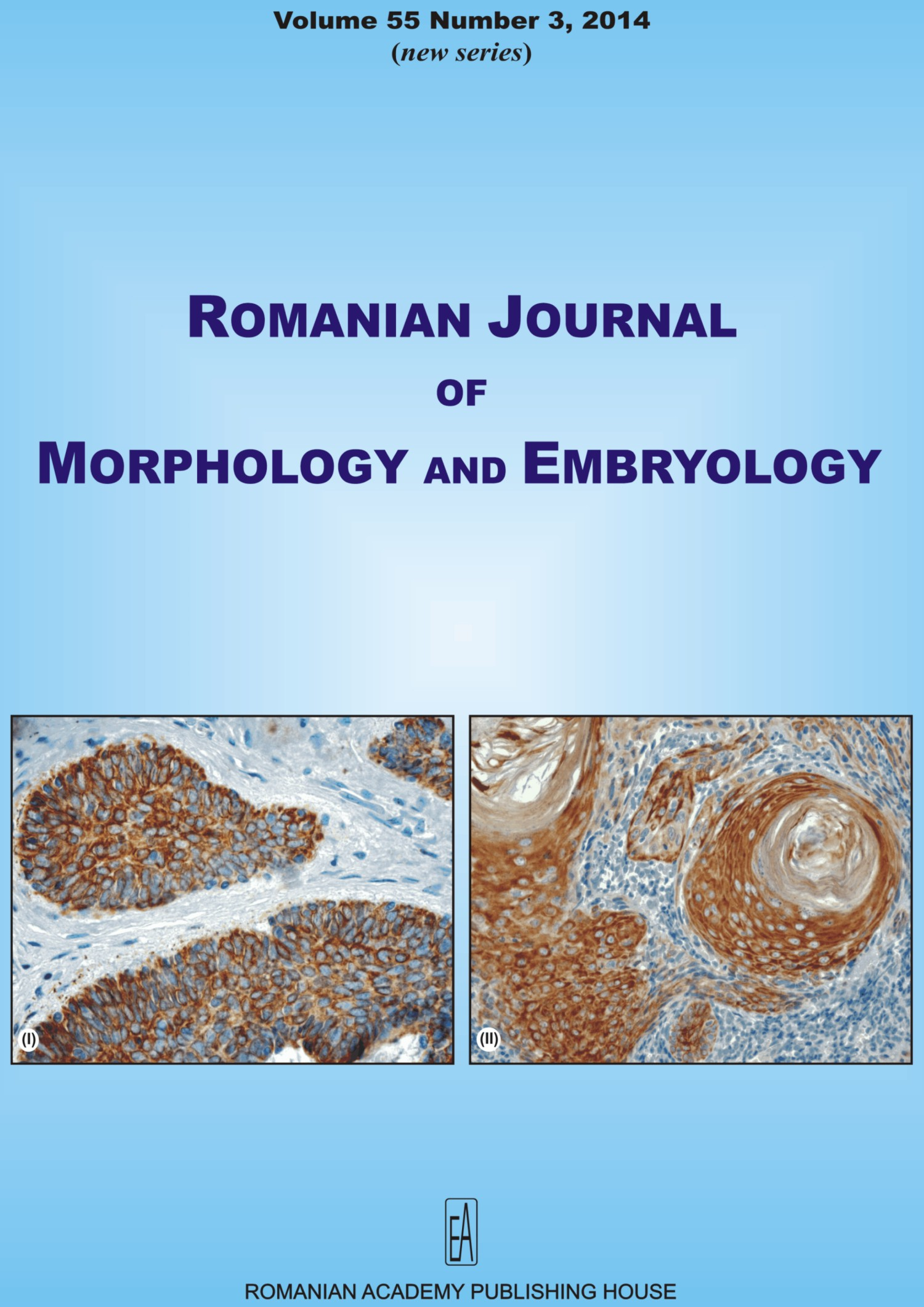 Romanian Journal of Morphology and Embryology, vol. 55 no. 3, 2014