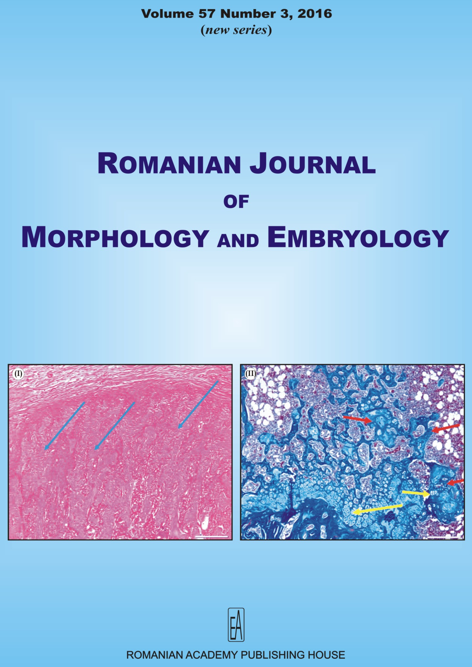 Romanian Journal of Morphology and Embryology, vol. 57 no. 3, 2016
