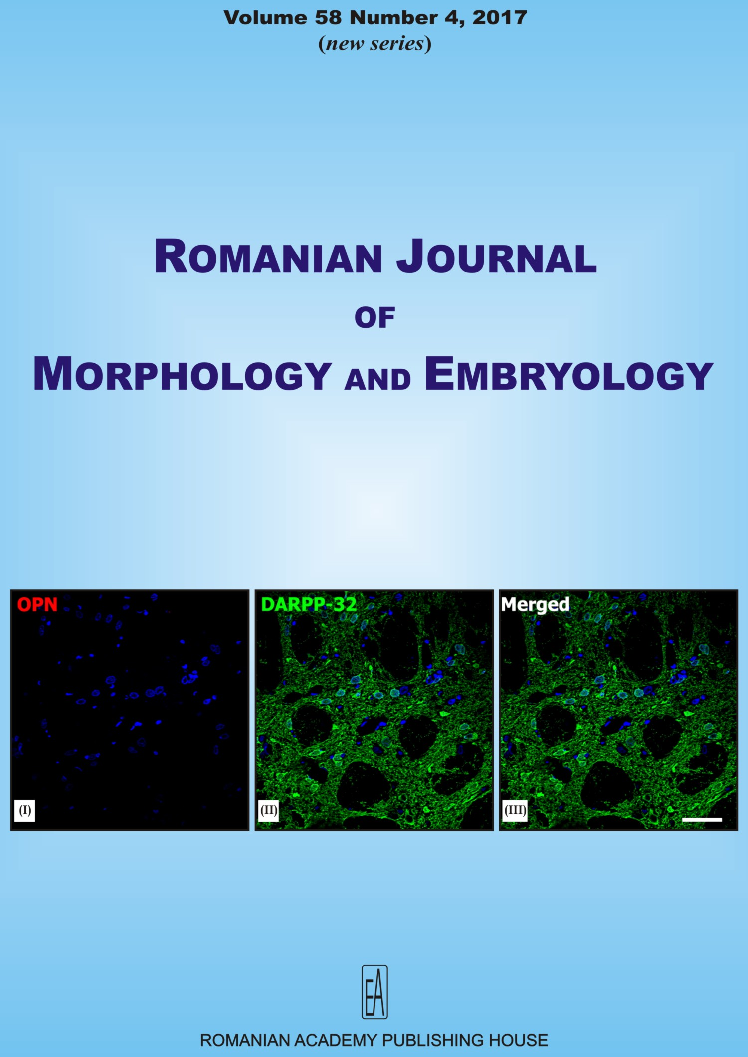 Romanian Journal of Morphology and Embryology, vol. 58 no. 4, 2017